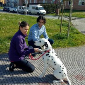 Cs pone de relieve la necesidad de luchar contra el envenenamiento de perros en las calles de Astillero y Guarnizo