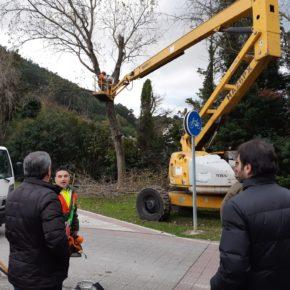 La concejalía de Medio Ambiente del Ayuntamiento de Castro Urdiales da comienzo a los trabajos de poda exhaustiva