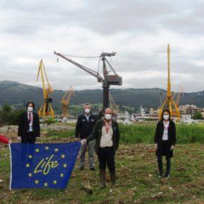 El Ayuntamiento de Astillero celebra el Día Mundial del Medio Ambiente con la naturaleza abriéndose paso en los terrenos industriales de Astander