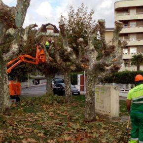 El Ayuntamiento de Castro-Urdiales da inicio a la campaña de podas