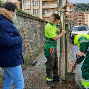 El Ayuntamiento de Castro-Urdiales da comienzo a las labores de plantación de marras del arbolado