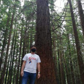 Cs critica el desinterés del Gobierno por proteger el monumento natural de las Secuoyas ante la afluencia masiva de visitantes